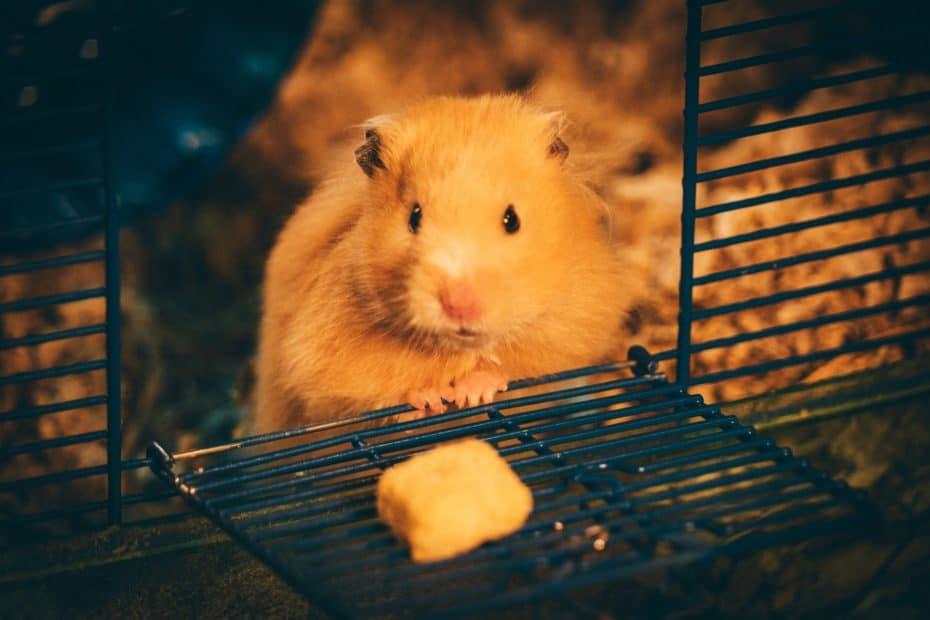 hamster in hamsterkooi