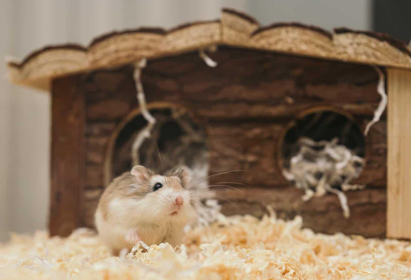 Dwerghamster in hamsterkooi en hooi