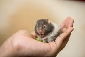 hamster tam maken