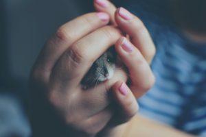 hamster tam maken met handen