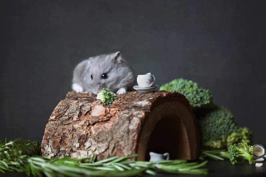 hamsterkooi inrichten