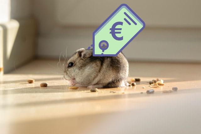 hoe duur is een hamster